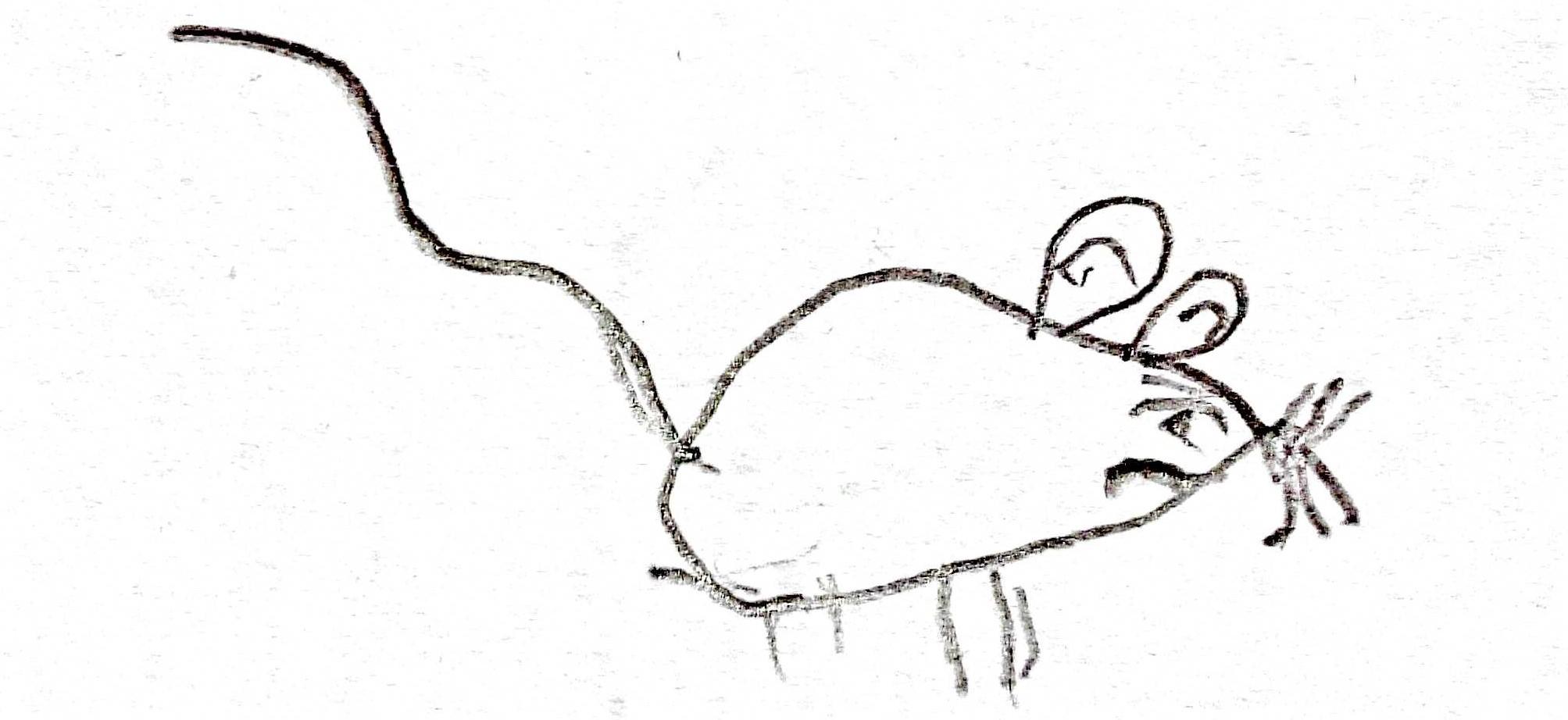 maus -klein